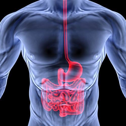 Интересные свойства пищеварительной системы
